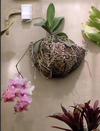 Посадка орхидей на «эпифитное дерево»